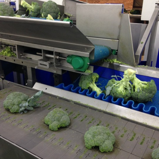 Brassica Equipment